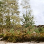 Heathland Restoration