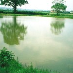 Pond and Lake Excavations